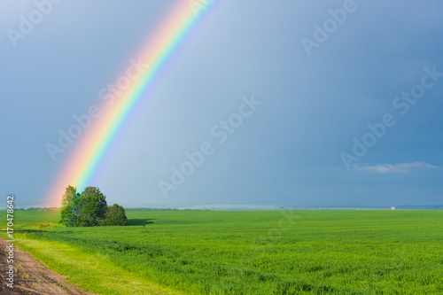 rainbow in the blue clear sky over green tranquil field illuminated by the sun in the country side