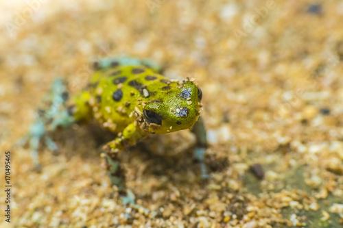 Fotobehang Kikker Small Frog Costa RIca