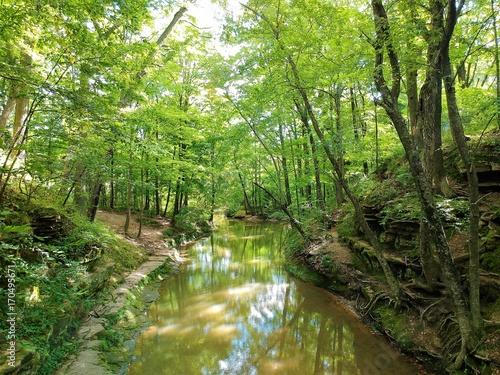 Papiers peints Rivière de la forêt Wilderness