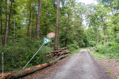 Fotobehang Pistache Wald