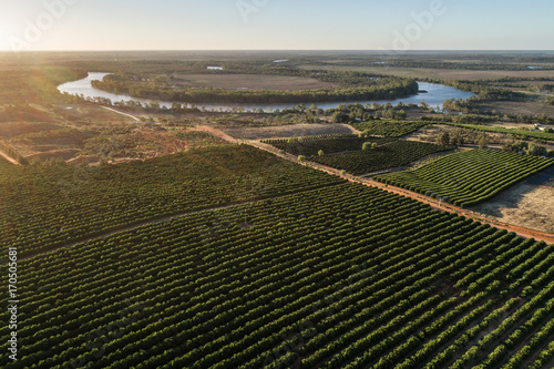 orchards, South Australia