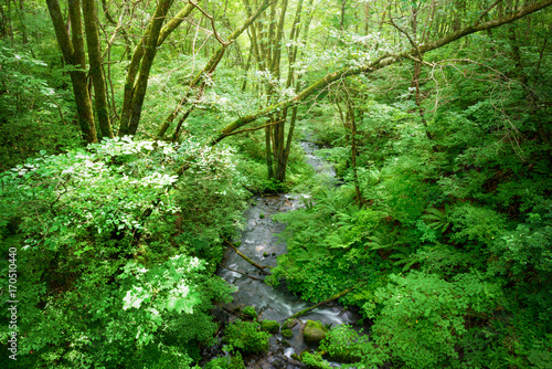 Papiers peints Vert 森の小川