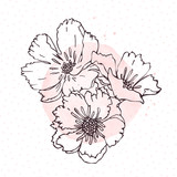 Hand drawn poppies isolated on white background with pink watercolor blot. Herbal engraved style illustration. Detailed botanical sketch.