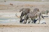 Etosha National Park, Namibia - Wildlife