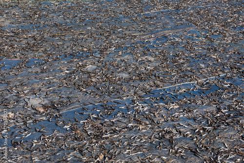 Aluminium Fyle Dried fish