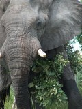Elephant - Up close and personal