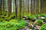Amazing nature landscape view of north scandinavian pine forest. Forest natural. Location: Scandinavian Mountains, Norway. Artistic picture. Beauty world