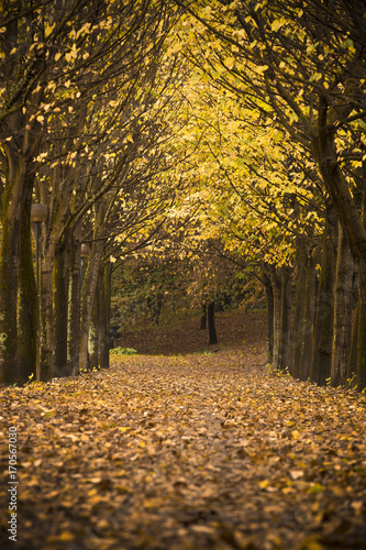 Fotobehang Herfst Autumn landscape with beautiful autumn leaves