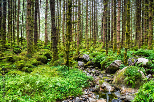 Keuken foto achterwand Bossen Amazing nature landscape view of north scandinavian pine forest. Forest natural. Location: Scandinavian Mountains, Norway. Artistic picture. Beauty world