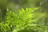 fern in the forest in summer