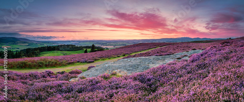 Panorama at Twilight over Rothbury Heather, on the terraces, which walk offers views over the Coquet Valley to the Simonside and Cheviot Hills, heather covers the hillside in summer - 170596059