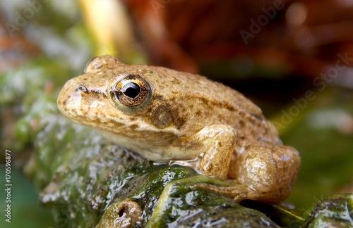 Fotobehang Kikker frog on the branch in the bar