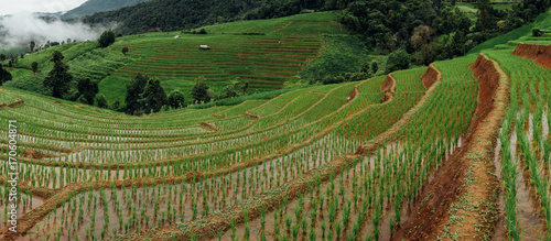 Deurstickers Rijstvelden Rice fields on terraced of Mae Cham,Chiang Mai, Thailand. Thailand landscapes.