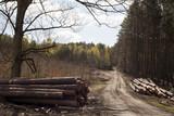 drewno wycinka lasu