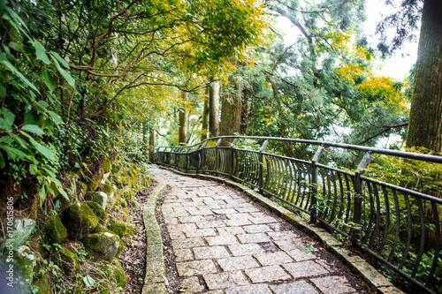 Papiers peints Route dans la forêt Hakone, Japan