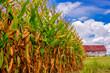Corn and barn