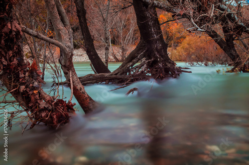 Fotobehang Diepbruine arbre inondé