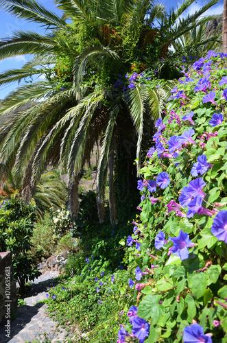Foto op Plexiglas Canarische Eilanden Purple morning glory flower in Canary Islands