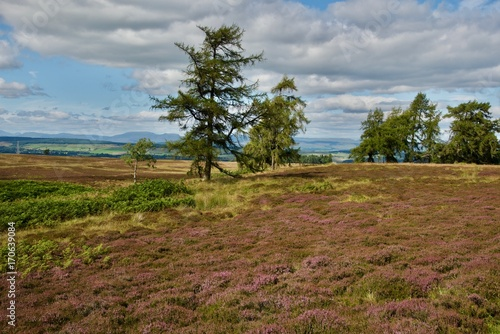 Fotobehang Donkergrijs roads on violet heath blossom hills in the Highland of Scotland in England