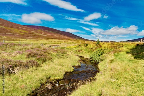 Papiers peints Melon violet heath hills of the Scottish highlands in summer under the blue sky