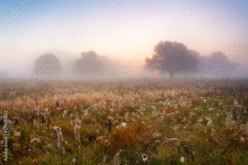 Fotobehang Ochtendgloren Picturesque autumn landscape misty dawn in an oak grove on the meadow.