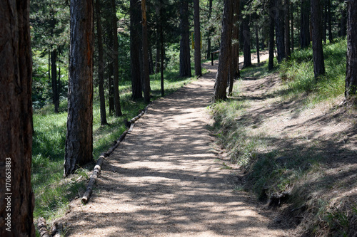 Papiers peints Route dans la forêt Beautiful path for walking and jogging in the forest