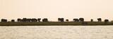 a herd of Elephants at sunet, Chobe Rive, Chobe National Park