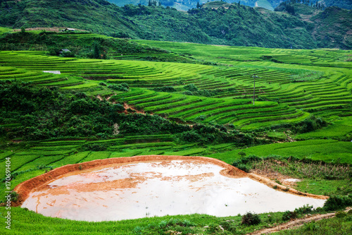 Fotobehang Groene terraced green rice fields around Sa Pa, Vietnam