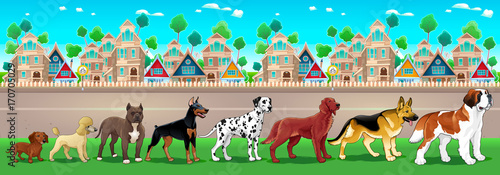 Papiers peints Chambre d enfant Collection of purebred dogs aligned on the town view