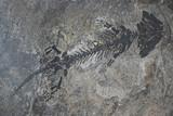 small reptile fossil