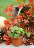 l'automne, et ses branches et ses légumes