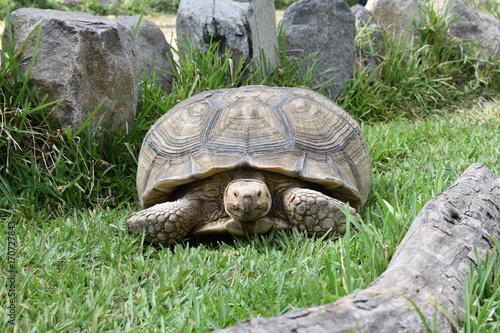 Aluminium Schildpad Turtle