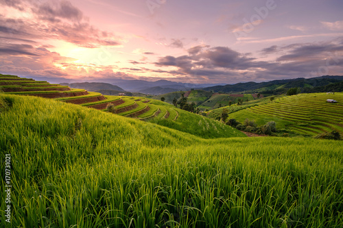 Fotobehang Rijstvelden Beautiful step of rice terrace paddle field in sunset at Chiangmai, Thailand. Chiangmai is beautiful in nature place in Thailand, Southeast Asia. Travel concept.