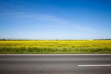 Asphalt road among the summer field - 170735855