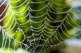 Spider web with morning dew - 170756209
