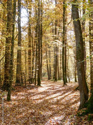 Fotobehang Weg in bos Chemin dans une forêt à l'automne