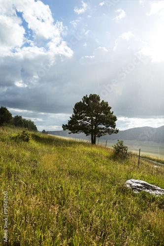 Foto op Plexiglas Blauwe hemel Sunlight shining on a lone tree in a grassland on a rainy afternoon