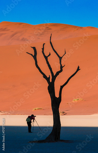 Fotobehang Koraal Minimal landscape with Dead Camelthorn Trees against red dunes in Deadvlei, Sossusvlei. Namib-Naukluft National Park, Namibia, Africa