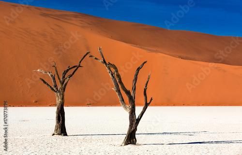 In de dag Oranje eclat Minimal landscape with Dead Camelthorn Trees against red dunes in Deadvlei, Sossusvlei. Namib-Naukluft National Park, Namibia, Africa