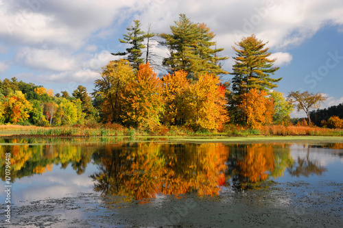 Fotobehang Herfst autumn colorful trees reflecting in tranquil lake under sky