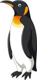 Cartoon penguin isolated on white background