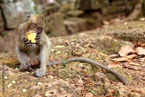 Aluminium Aap Monkey at Angkor site, Cambodia