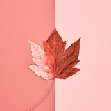 Autumn Arrives. Fall Leaves Background. Fall Fashion Design. Art Gallery. Minimal.Maple Leaf on Pink. Autumn Vintage Concept - 170810274