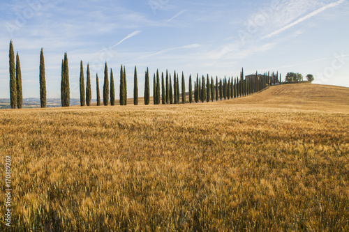 Fotobehang Toscane Tuscany hills and meadow, summer in Italy
