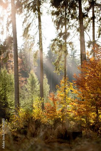 Papiers peints Automne autumn in the forest