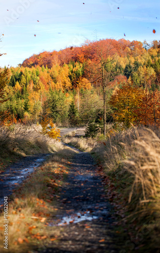 Fotobehang Herfst autumn in the forest