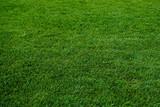 Fototapety green grass texture. Green meadow