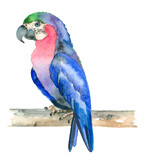 Watercolor hand drawn parrot