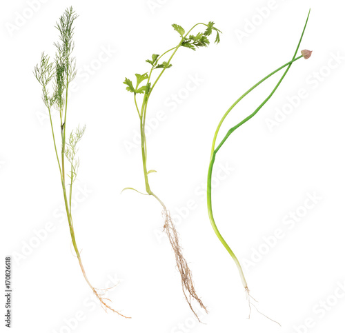 In de dag Bloemen set of three green plants with roots on white