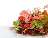 bouquet de feuilles et branches d'automne sur fond blanc - 170826804